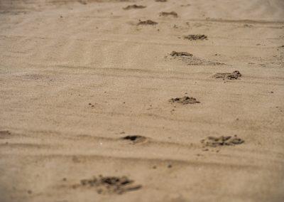 Đurđevački pijesci
